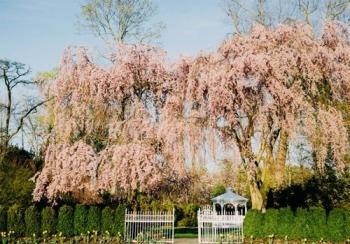 Shadowbrook at Shrewsbury Springtime